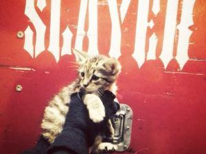 slayer_kitten